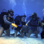 An angelfish visits a Blue Water Scuba Open Water class
