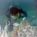 What was this unkown diver in Cozumel looking for2